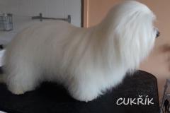 cukrik_1