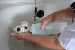 nanášení šampónu