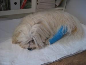 Bennie třetí den po operaci
