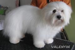 valentin_1