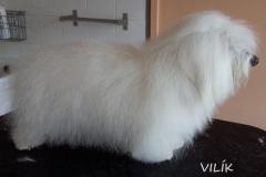 vilik_1